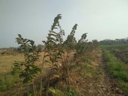 Agricultural/Farm Land for Sale